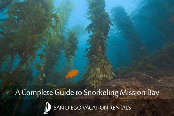 Snorkeling in Mission Bay - San Diego Garibaldi