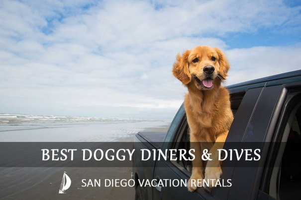 Pet Friendly Vacation in San Diego